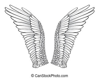 Wings Realistic Illustration Design Elements