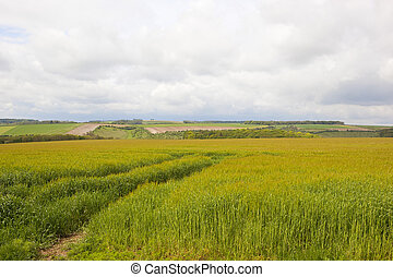 yorkshire wolds barley - yorkshire wolds lush green barley...