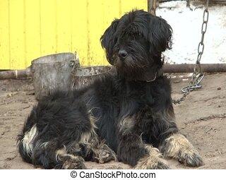 Dog at yard