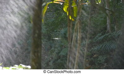 Green tree branches under the falling rain. Tropical rain in...