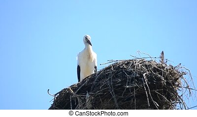 Stork stands still patiently in its nest on background of...