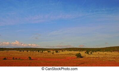 Motion Past Plain Sunny Rural Landscape with Rare Trees -...