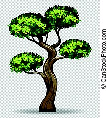 Bonsai tree on transparent background illustration