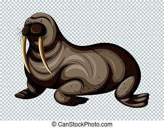 Big walrus on transparent background illustration