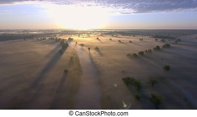 Aerial sunrise with fog at the tree tops in the rural countryside