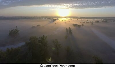 aereo, campagna, albero, cime, nebbia, rurale, alba