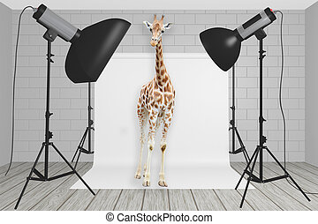Giraffe stands at the center of a photography studio with...