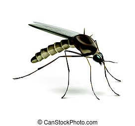 Mosquito on white background - Vector Mosquito close up side...