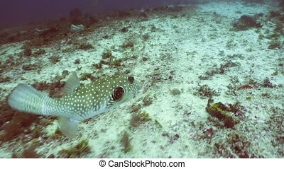 Coral reef and tropical fish.Philippines - Fish and coral...