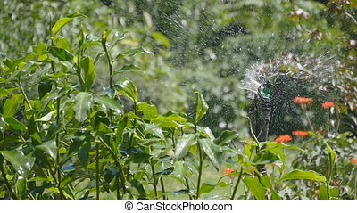 Automatic watering of lawn, garden. System automatic sprinkler. Slow motion