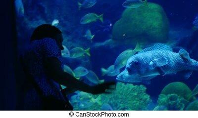 Woman in the aquarium watching an exotic beautiful fish....