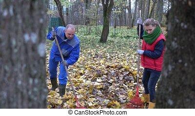 people woman man rake dry autumnal leaves in park. 4K -...