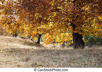 Autumn landscape - Red yellow foliage on tree