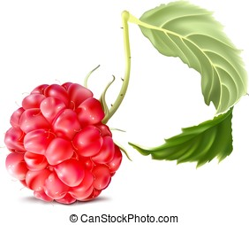 Raspberry. Fully editable handmade mesh. Vector...