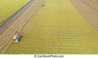 colheita, campo, vista, aéreo, combinar