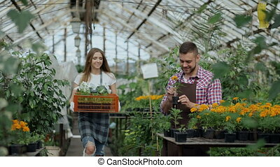 Young attractive florists couple in apron working in greenhouse. Cheerful woman walking with box of flowers and talks man loosen plant
