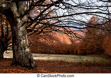 Beautyful  tree shape - Tree shape in the woods