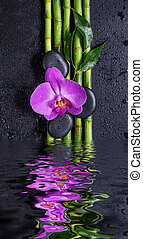 Stones, orchid flower and bamboo reflected in a water - Spa...
