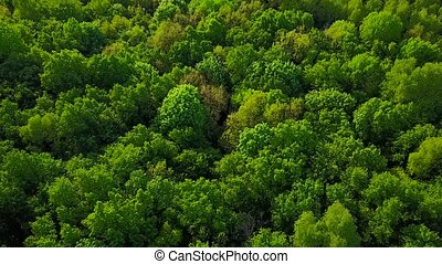 Flight above the green forest - aerial survey