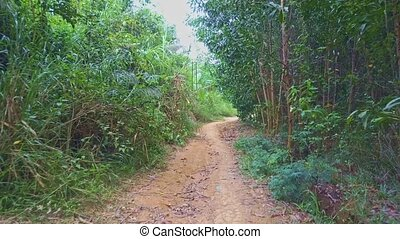 Flycam Moves along Ground Footpath in Green Tropical Forest...
