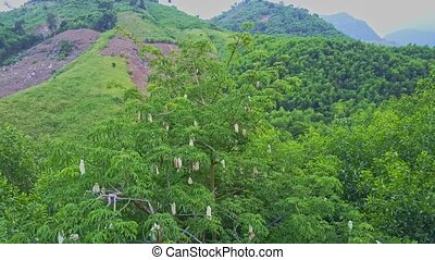Aerial View Tropical Jungle and Tree with White Flowers -...