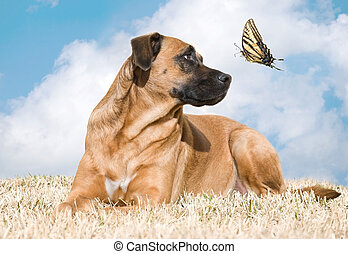 Curious Dog - Beautiful dog looks up at a tiger swallowtail...