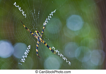spider - Spider with ovary on back hang on her web decored...