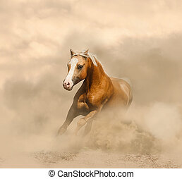 Palomino horse in the dust