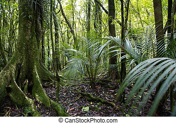 Jungle - Tropical forest jungle, natural background