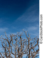 Gnarly Branches of Dried Tree on Blue Sky