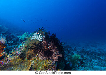 Colorful Tropical Coral Reef with Sea Lilies - Different...