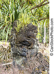 Tree stump formed by lava - A tree stump in Hawaii was...