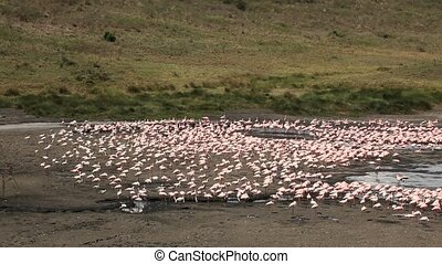 Group of Flamingos on Lake in Africa
