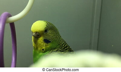Portrait of yellow green Parrot