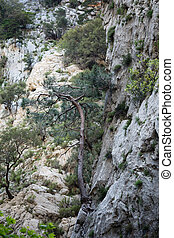 Trees growing in mountains - Trees growing in rocky...