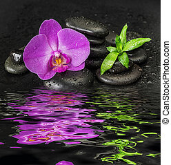 Orchid flower and bamboo reflected in a water - Spa concept...