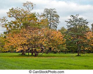Autumn in London Park - Autumn scene in London Royal Botanic...