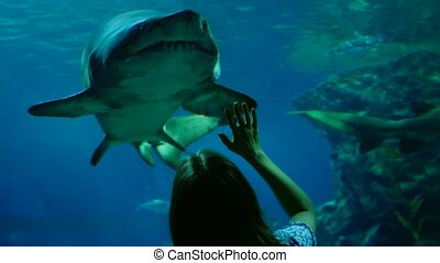 Woman in the aquarium watching at the great shark. - Woman...