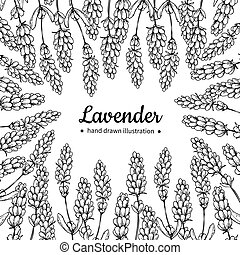 Lavender vector drawing frame. Isolated wild flower and...
