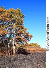 autumn wood after fire