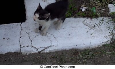 dirty little kitten meows while sitting on the ground