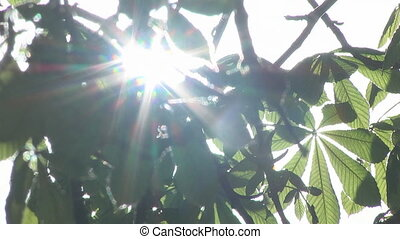 Sun Rays Through Tree Leaves - Sunlight breaks through the...