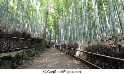 Bamboo grove Arashiyama - Surreal path in bamboo grove at...