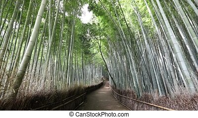 Woman walking in Bamboo Forest - Happy tourist woman walking...