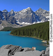 Moraine Lake with chip-munk - moraine lake with cheeky...
