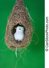 White bird in nest isolated on green