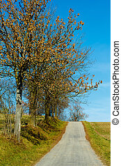Road in the autumn with yellow trees