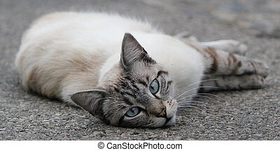 Cat lying on the pavement