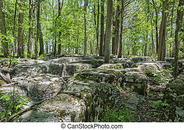 The Slaughter Pen At Stone River National Battlefield In...