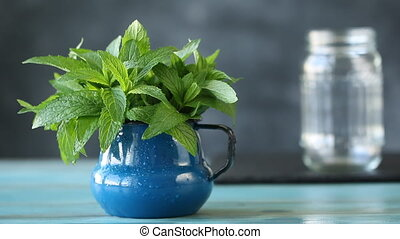 Female hand taking fresh mint, healthy herb concept